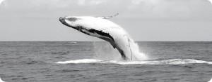 baleine, fond marin, réunion, saint denis, hôte, chambre, sortie marine